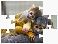 Monkey On-Line Jigsaw Puzzles