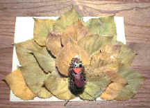 Autumn Leaf Turkey craft